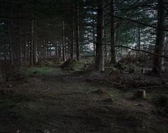 (roundtheplace) Tags: wood england forest mediumformat landscape portra portra400 landscapephotography pentax67 englishlandscape