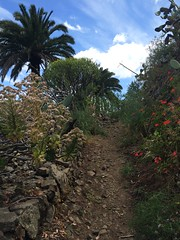 Ruta del agua Santa Brigida Gran Canaria Islas Canarias 08 (Rafael Gomez - http://micamara.es) Tags: santa ruta del agua canarias gran senderismo islas canaria brigida