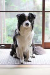 maro160515 (kanekomimi) Tags: family dog sunlight animals canon highlight maro carlzeiss planart1450 5dmark