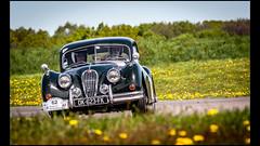 Jaguar XK 140 (1955) (Laurent DUCHENE) Tags: jaguar 140 xk 2016 tourauto peterauto circuitdebresse