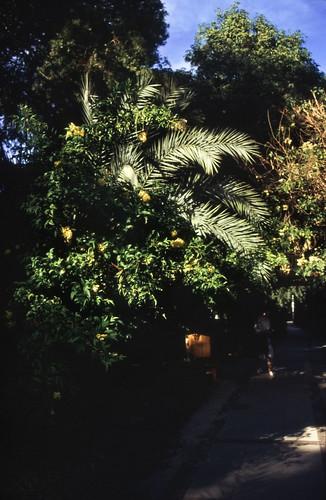 """Ägypten 1999 (067) Assuan: Botanischer Garten, Elnabatat's Island • <a style=""""font-size:0.8em;"""" href=""""http://www.flickr.com/photos/69570948@N04/27168316025/"""" target=""""_blank"""">View on Flickr</a>"""