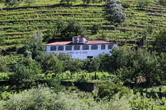 Sur le Douro (hans pohl) Tags: houses windows portugal nature architecture maisons porto douro fentres
