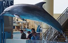 Millenie (EmilyOrca) Tags: show light sunlight water mammal aquarium jump marine body dolphin bow splash cetacean