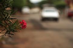 Fleur (3316) (Jorge Belim) Tags: flora flor 70200 canoneos7d