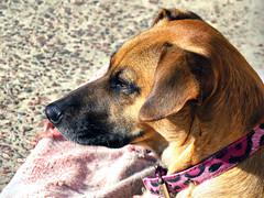 Perfil_01 (jagar41_ Juan Antonio) Tags: animal perro perros animales mascota mascotas