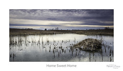 Home Sweet Home (baldwinm16) Tags: winter house ice home nature season march illinois midwest il hut marsh muskrat wetland natureofthingsphotography