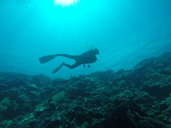 Diving and feeling weightless is a feeling you dont get every day. But here in Palau this is life.