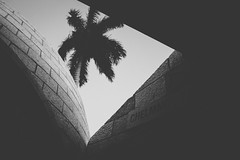 Holocaust Memorial (fgazioli) Tags: street travel blackandwhite usa beach monument holocaust blackwhite miami wb pb eua miamibeach pretoebranco holocaustmemorialmiamibeach