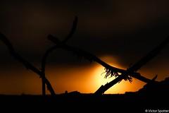 Sunset (plane-spotter31) Tags: blue sunset red sky sun black tree love nature beautiful sunshine yellow night plane sunrise canon wonderful inflight wings twilight geek aviation air awesome dream cockpit