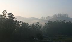 Misty Morning.jpg (melissaenderle) Tags: teaplantation fog vacation asia kerala mountain