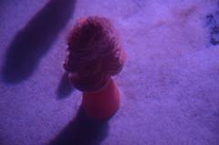 This Fleshy Sea Pen was a bit shrivelled (oldandsolo) Tags: canada ontario toronto torontocity lakeontario trainterminus trainterminal railwayterminal aerialview cbd torontofinancialdistrict railwayland formercoachyards ripleysaquariumofcanada fishtank livefish seaanemone fleshyseapen ptilosarcusgurneyi
