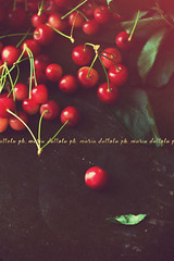 Cherries (Maria Dattola) Tags: from above stilllife food nature fruits daylight cherries bokeh details nopeople foliage indoors brightcolors copyspace freshness yummyfood rawfood vividcolors redflare darkbackground elevatedview vintagemood mariadattola