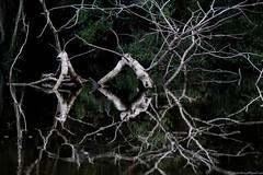 Reflexes (david.almazul) Tags: amazonas cuyaveno reflejos ro reflexes