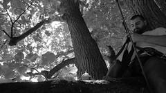 just checking... (arborist.ch) Tags: tree baum treeclimbing arborist treecare baumpflege arboriculture