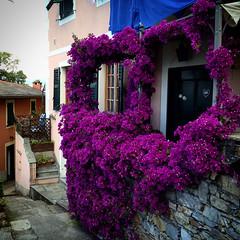 Foto-18-06-16-12-21-11 (fdpdesign) Tags: camogli portofino escursionismo 2016 liguria italia italy apple iphone mare monti sentieri sea instagram