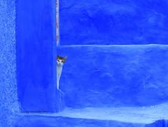 Detalle.Chechaouen Marruecos.(Para Nona Delgado Muoz (lameato feliz) Tags: color azul gato chaouen chefchaouen marruecos xauen