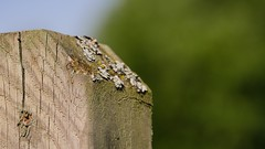 structure (Yasmine Hens) Tags: macro nature fence europa flickr belgium ngc structure bois namur hens yasmine wallonie clture iamflickr flickrunitedaward hensyasmine