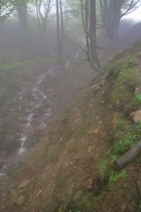 Parque natural de #Gorbeia #Orozko #DePaseoConLarri #Flickr -089 (Jose Asensio Larrinaga (Larri) Larri1276) Tags: 2016 parquenatural gorbeia naturaleza bizkaia orozko euskalherria basquecountry