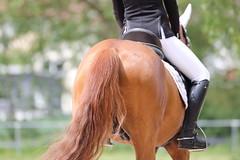 IMG_3427 (dreiwn) Tags: horse pony horseshow pferde pferd equestrian horseback reiten horseriding showjumping dressage reitturnier dressur reitsport dressyr ilsfeld dressuur ridingclub junioren ridingarena pferdesport springreiten reitplatz reitverein dressurreiten dressurpferd dressurprfung tamronsp70200f28divcusd jugentturnier