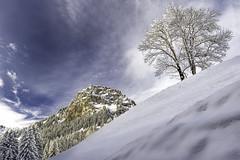 Slope - Champry (Switzerland) (luke.switzerland) Tags: champry switzerland swiss alps travel landscape nature mountains tree snow winter clouds nikon d600