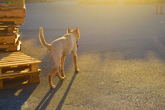 lonely (GUANGYU XU) Tags: lonely dog yellow ahead