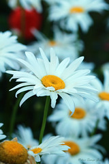IMG_9965 (nelson_tamayo59) Tags: naturaleza flores jardin canarias tenerife