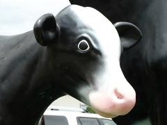 Wishing you a moo-velous weekend! (e r j k . a m e r j k a) Tags: ohio berlin cow whimsy figure roadside calf holmes us62 oh39