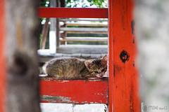 Today's Cat@2016-07-04 (masatsu) Tags: cat pentax catspotting mx1 thebiggestgroupwithonlycats