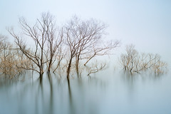 Remnant (www.jasonarney.com) Tags: longexposure trees water japan spring soft dam nd  submerged saga kyushu     ndfilter  southjapan kasagawa jasonarney japanscapes  kasegawadam
