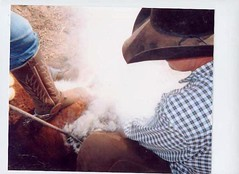 Branding at the Mckinney ranch (sammysight2003) Tags: g10 cowboystexasbrandingarchercitycanon