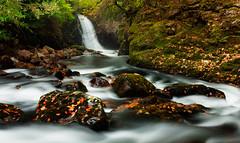 Erme intruder (snowyturner) Tags: autumn trees leaves river waterfall rocks bend devon ivybridge erme