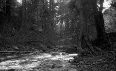 Closing lights. (bavan.prashant) Tags: film march 17 100 v600 135 canonet giii orwo ql 2013 un54