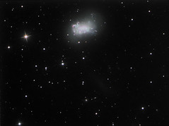 NGC 4449 Irregular Dwarf Galaxy in Canes Venatici (Not Ready for Primetime Stars) Tags: pine dwarf ngc galaxy canes lone 4449 venatici