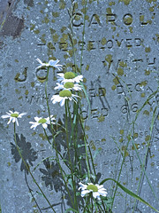 Moonlight Shadows (Messent) Tags: england memorial poetry shadows moonlight churchyard childrey poetryandpicturesinternational poetryforall