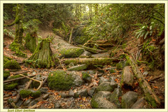 Still Life with Stump and Sword Fern (ScottElliottSmithson) Tags: green nature forest canon newcastle eos waterfall moss woods rainforest pacificnorthwest washingtonstate bellevue issaquah kingcounty cougarmountain fused mossyforest temperaterainforest photomatix coalcreekpark coalcreekfalls drywaterfall cougarmountainpark eos7d eastsideseattle seattleeastside newcastlewashington suburbanseattle dtwpuck scottsmithson scottelliottsmithson