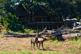 Botswana Okavango Delta Photo Safari 5