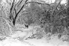 020769 28 (ndpa / s. lundeen, archivist) Tags: park trees winter people blackandwhite bw snow storm 1969 film monochrome boston 35mm ma blackwhite path massachusetts nick snowstorm pedestrians 1960s february common snowfall blizzard bostoncommon beaconhill snowcovered winterstorm dewolf heavysnow bigsnow recordsnowfall recordsnow nickdewolf photographbynickdewolf downedtreebranches