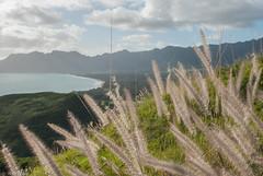 Furry Bellows (omegakoa) Tags: nature oahu hiking bunker bellows lanikai mokuluaislands pillboxes themokes