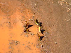 DSCF5617 (JohnSeb) Tags: brazil nature paran argentina rio brasil ro butterfly river waterfall nationalpark fiume rivire cataratas fluss iguazu iguaz cascada  iguau rivier johnseb  southamerica2012