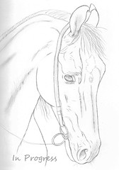 Marwari horse - In Progress (© S. D. 2010 Photography) Tags: horse india art pencil asian sketch drawing progress graphite stallion equine marwari