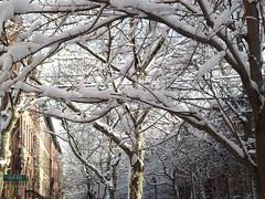 Jersey City Snow View, Jersey City, New Jersey (lensepix) Tags: snow newjersey jerseycity snowfall wetsnow snowview jerseycitysnow