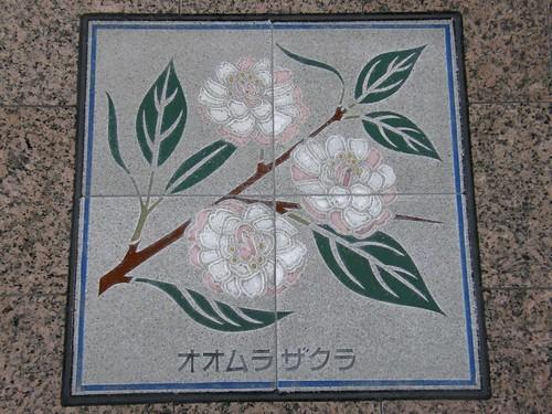 #4478 oomurasakura