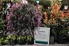 2014-02-28_0384hamilton (lblanchard) Tags: dendrobium flowershow 2014 mrshamilton horticort