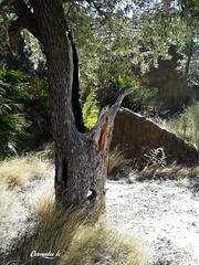 20140304_123047 (cervantes_lc 81) Tags: spain murcia olivera ojs valledericote