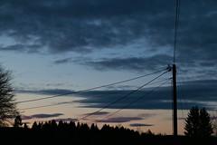 evening sky (Anamaria Brigitte) Tags: pink trees sky orange tree night dark evening pinky late