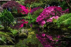 Japanse Tuin Clingendael 2014-02211 (Arie van Tilborg) Tags: japanesegarden denhaag thehague clingendael japansetuin clingendaelestate landgoedclingendael