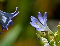 Motehrs Day 2014. (Eugene1959) Tags: myfrontyard experimentations flowersandmacros nikond3100 mothersday2014