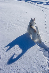 IMGP2359 (Matt_Burt) Tags: winter shadow white snow ski skiing bat ears pup batdog signalpeak