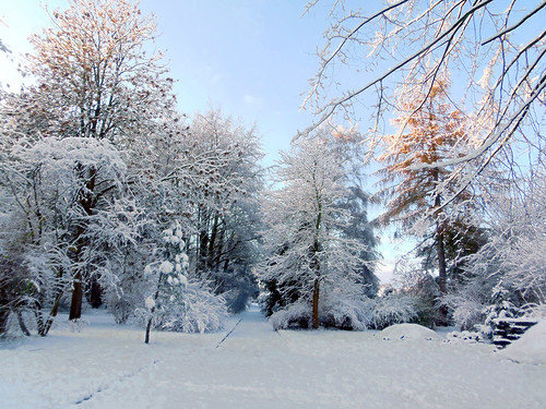 White frosty Day