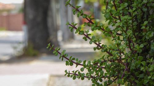 Pathway Jade